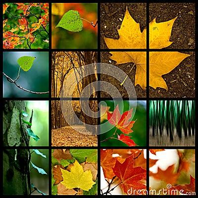Free Autumn Theme Royalty Free Stock Image - 7060866