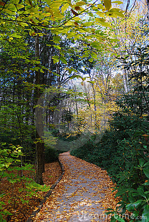 Autumn trail in forest