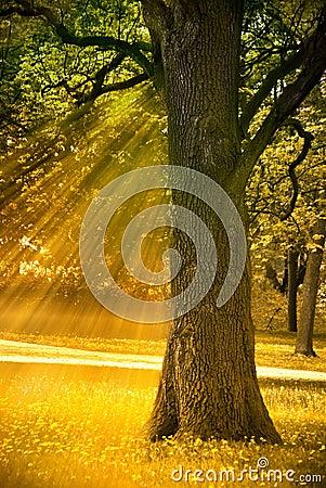 Free Autumn Tree Stock Photos - 15028003