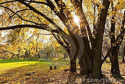 Autumn Tree Stock Image - Image: 22363731