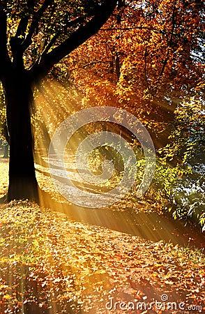 Free Autumn Tree Stock Image - 9542551