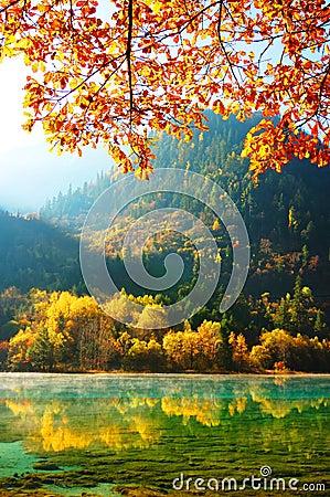 Free Autumn Tree And Lake In Jiuzhaigou Royalty Free Stock Photo - 13890845