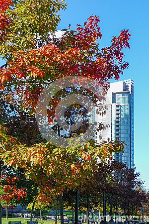 Autumn foliage on tree in Vancouver