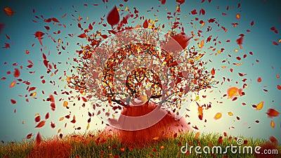 Autumn Tree. Defoliation stock footage