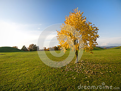 Autumn tree on field