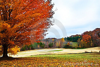 Autumn Tree on Golf Course
