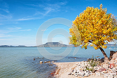 Autumn tree at Lake Balaton,Hungary