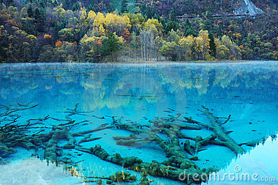 autumn tree lake in jiuzhaigou
