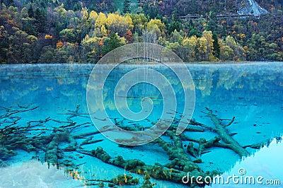 autumn tree lake in jiuzhaigou