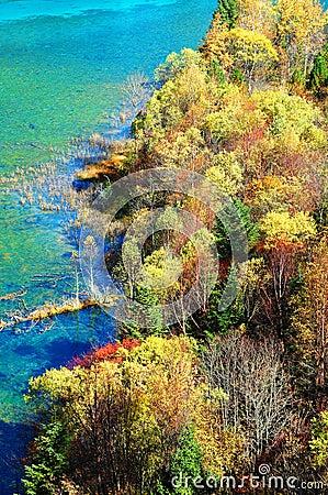Autumn tree and lake in jiuzhaigou