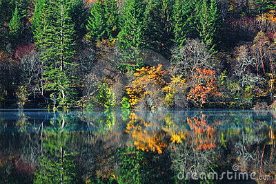 Autumn tree and lake in Jiuzhaigou