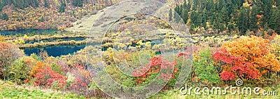 Autumn tree and lake  panorama  in Jiuzhaigou