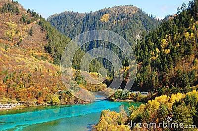 Autumn tree mountain and lake in jiuzhaigou