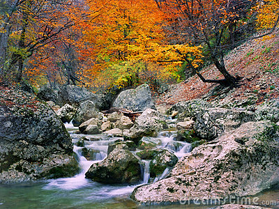 Autumn tree near the river