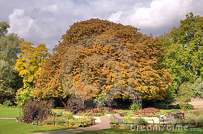 Autumn tree in park or garden