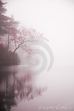 Autumn tree and  pond in mist