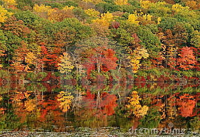 Autumn Tree Reflections