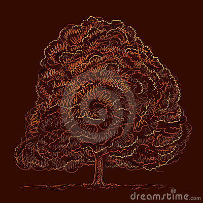 Autumn tree sketch