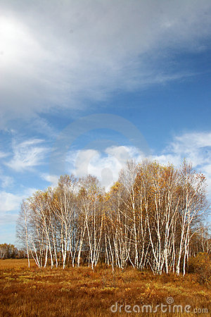 Free Autumn Trees Royalty Free Stock Images - 1403669
