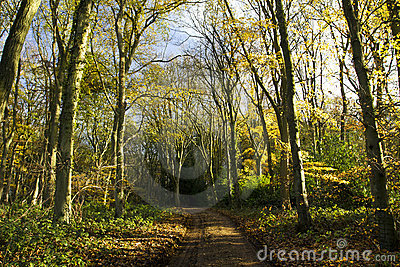 Autumn Trees in Cawston Wood