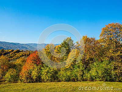 Autumn trees in countryside