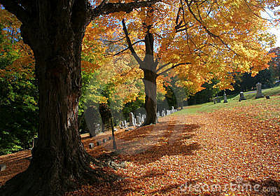 Autumn trees and fallen leaves