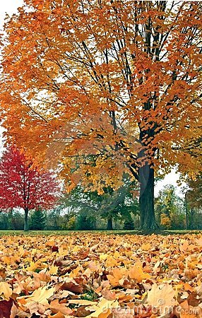 Autumn trees and leaves