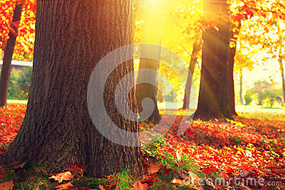 Autumn Trees and Leaves in sun light