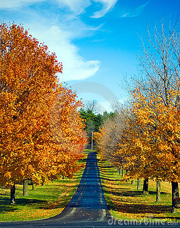 Autumn Trees line a Road
