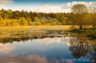 Autumn trees over lake , Ireland