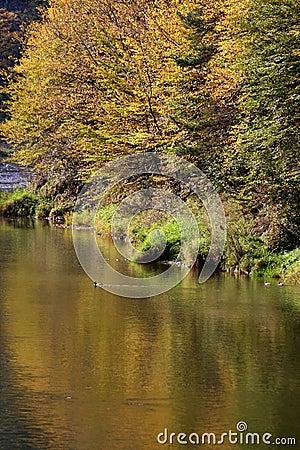 Free Autumn Trees, Poland Royalty Free Stock Photos - 578918