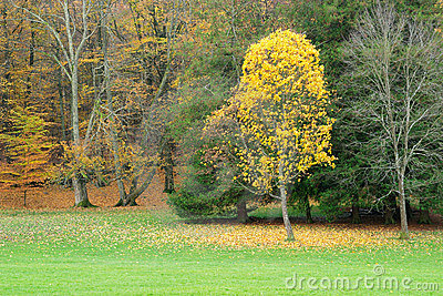 Autumn trees with red and yellow leaves