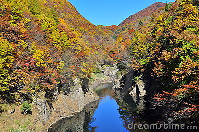 Autumn trees reflected in Tonegawa River