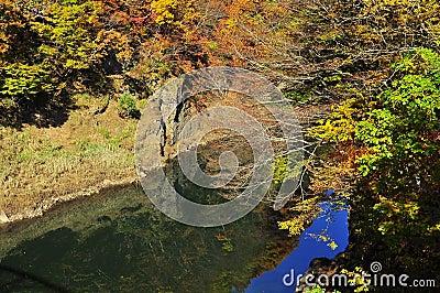 Autumn trees reflected in Tonegawa River