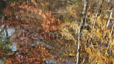 Autumn trees reflecting in a lake stock footage