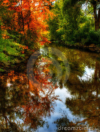 Autumn Trees Reflection
