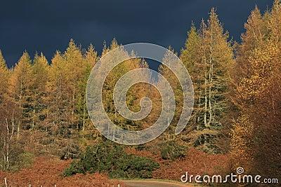 Autumn Trees Stormy Grey Sky