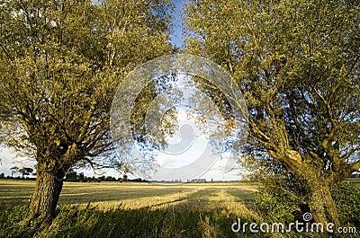 Autumn trees symmetry