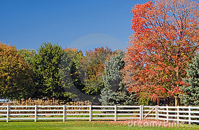 Autumn trees and white fence