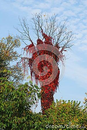 Autumn tress