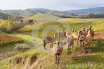 Autumn in Tuscany, Italy