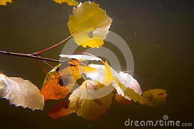 Autumn underwater on the lake