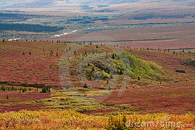 Autumn in Valley in Denali National P