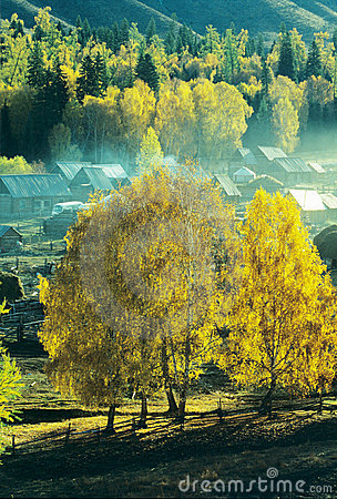 Autumn village Baihaba, xinjiang,china