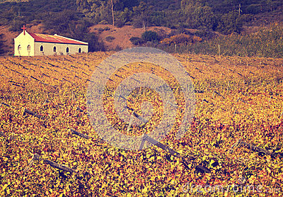 Autumn vineyards with small church