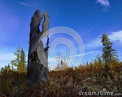 Autumn in Western Siberia