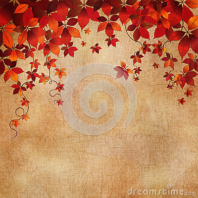 Autumn wild grapes leaves background
