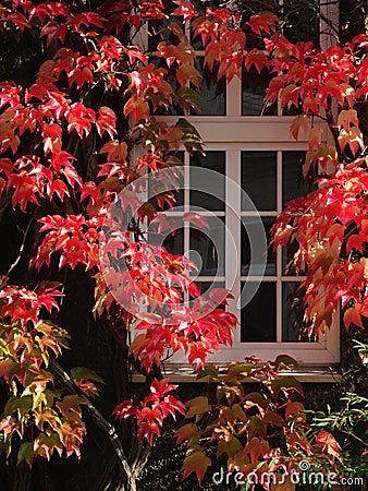 Free Autumn Window Stock Photos - 21430453