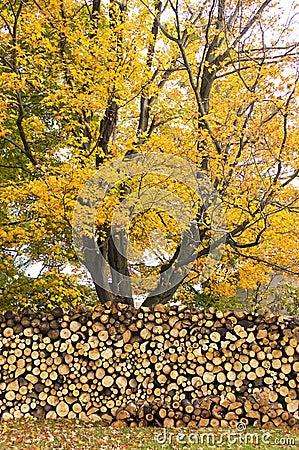 Free Autumn Woodpile Stock Photos - 24060193