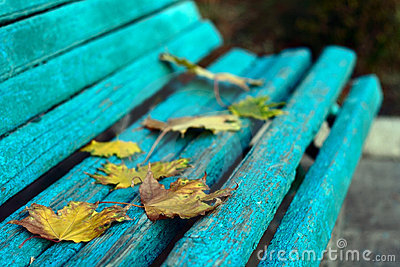 Autumn yellow leaves on bench